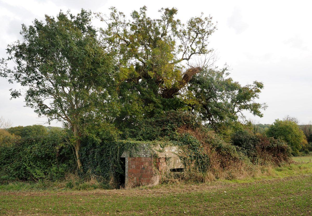 WW2 Pillbox hidden under a tree