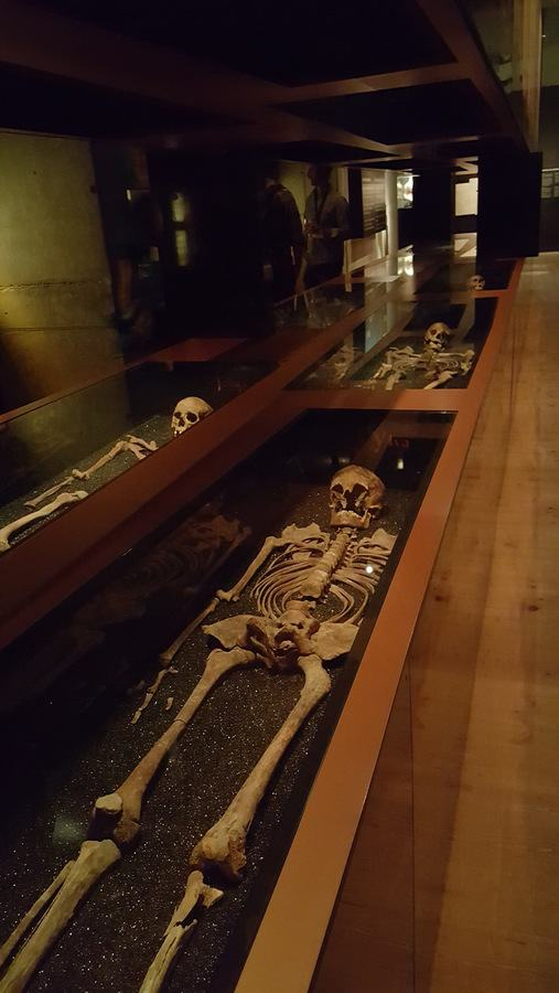 Vasa skeletons