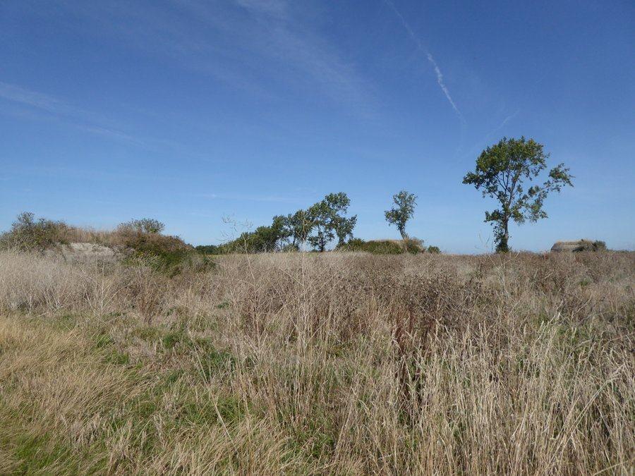 View across an uninspiring flat field of brown scrub grass & trees