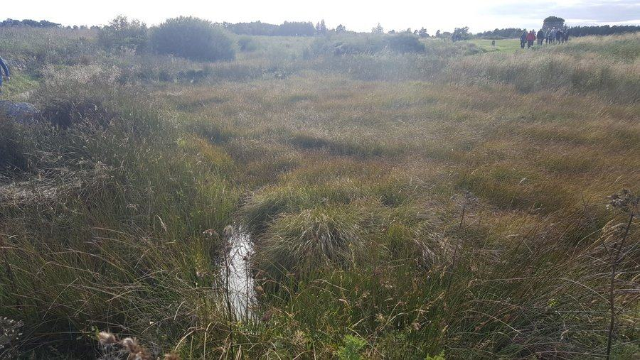 Marshy middle ground at Culloden